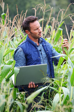 an agronomist inspecting a corn plant