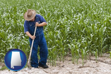 a farmer growing corn in a cornfield - with Alabama icon