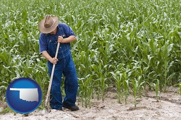 a farmer growing corn in a cornfield - with Oklahoma icon